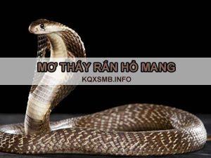 Mơ thấy rắn hổ mang đánh con gì xác suất trúng cao?